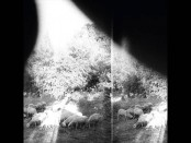 Godspeed You! Black Emperor: Asunder, Sweet, and Other Stories